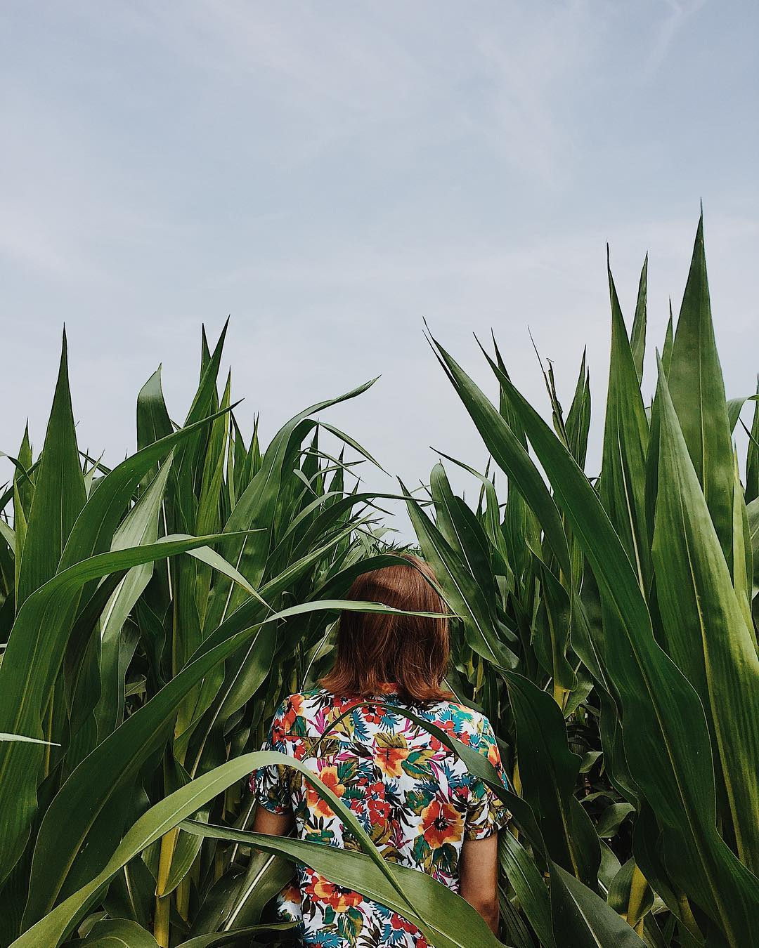 girl walking through corn field of dreams