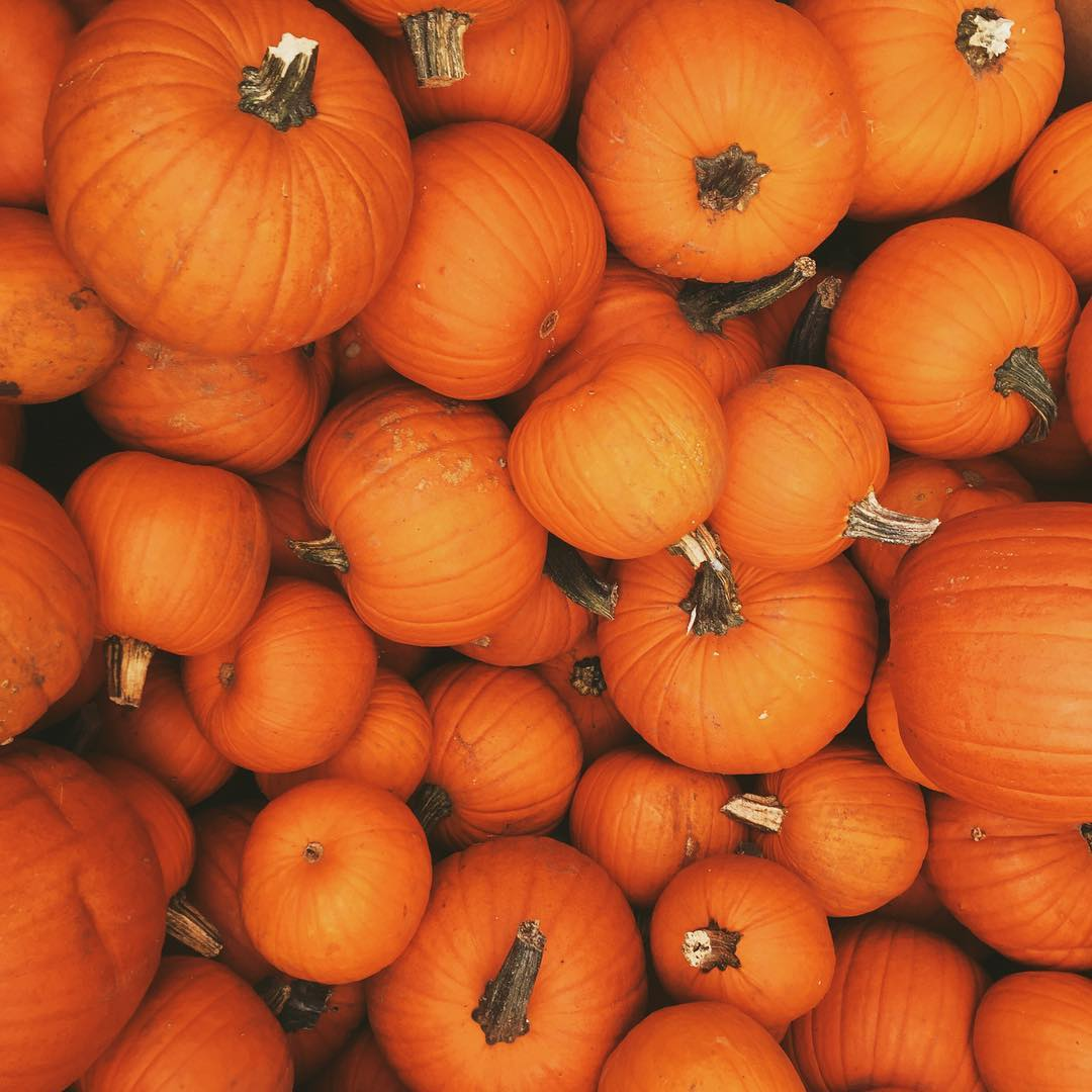 Pumpkins Fall