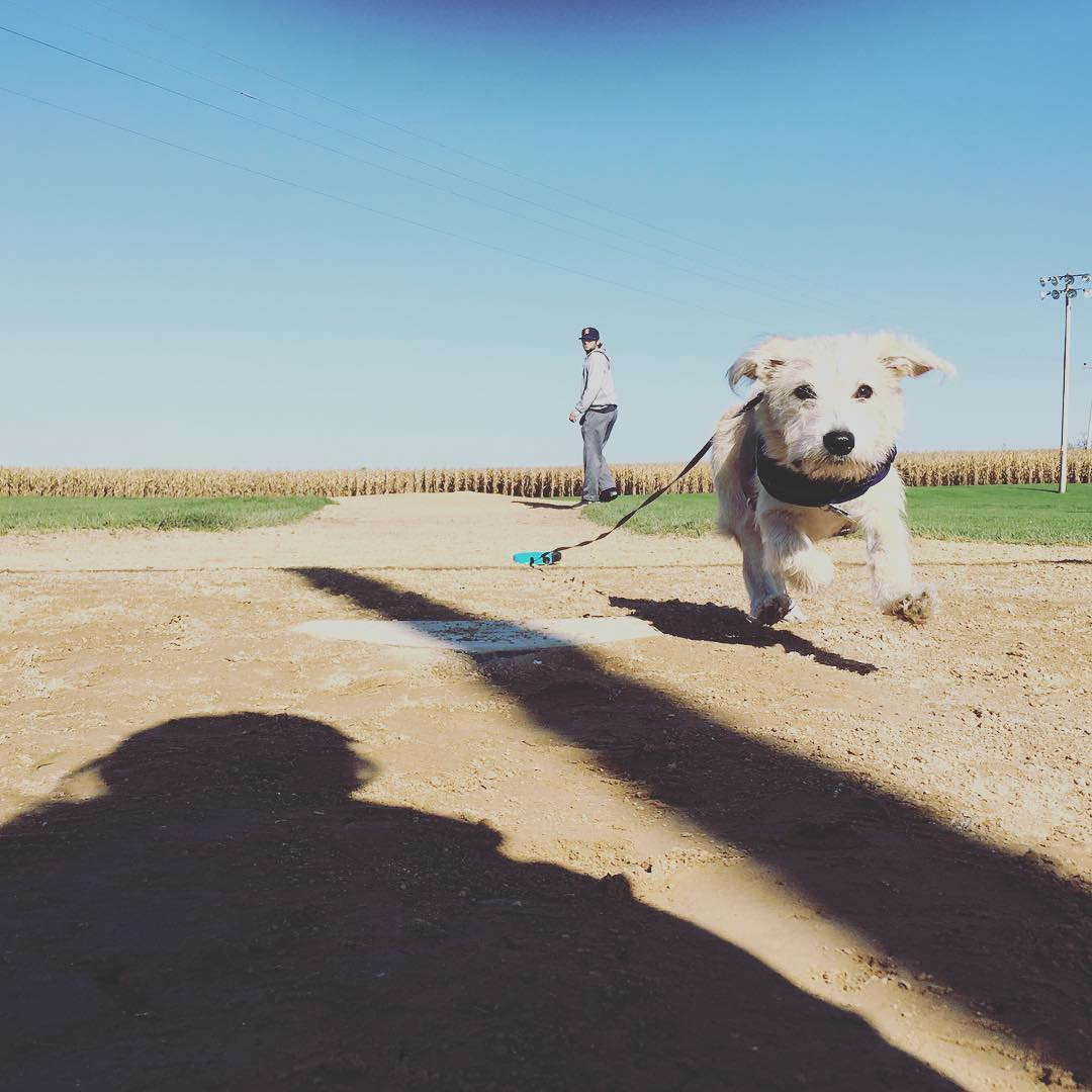 field of dreams dog running bases