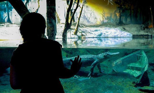 alligator river museum dubuque
